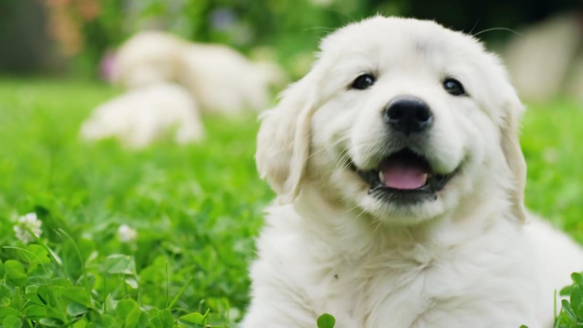 Shoot Smart Puppies Google Gunsamerica Digest
