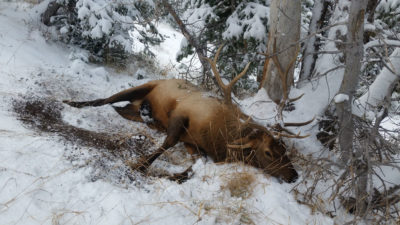 Setting Up A Rifle For An Elk Hunt