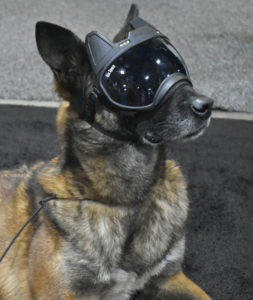Dog Goggles With A Video Camera in Them? Yep, Rex Specs Does That & 8211; SHOT Show 2019