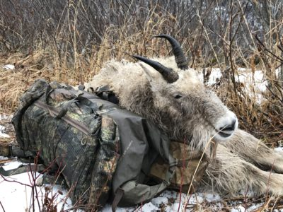 Alaskan Mountain Goat Hunt: Cold, Wet and Exhausted