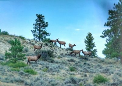 Create The Frenzy & 8211; Archery Elk Hunting & 038; Calling Strategies